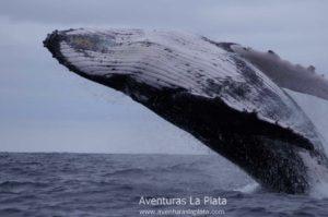 Tour de observación de ballena Jorobada en Puerto López