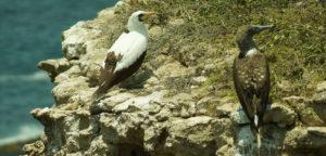 Aves Isla de la Plata